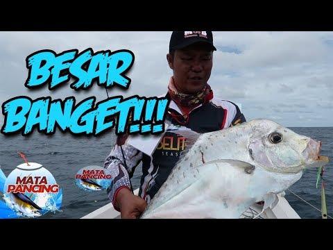 Sang Jawara Turnamen Belitung, Menemukan Diamond Trevally - Mata Pancing (18/7)