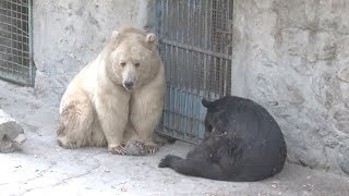 Only Zoo in Afghanistan Provides Relief For War-torn Country