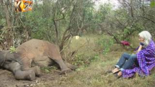 Kuki Gallman shot by raiders while walking in her Laikipia ranch
