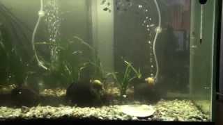 Подводный мир в аквариуме:  и прикольные котята Underwater World aquarium  and funny kittens