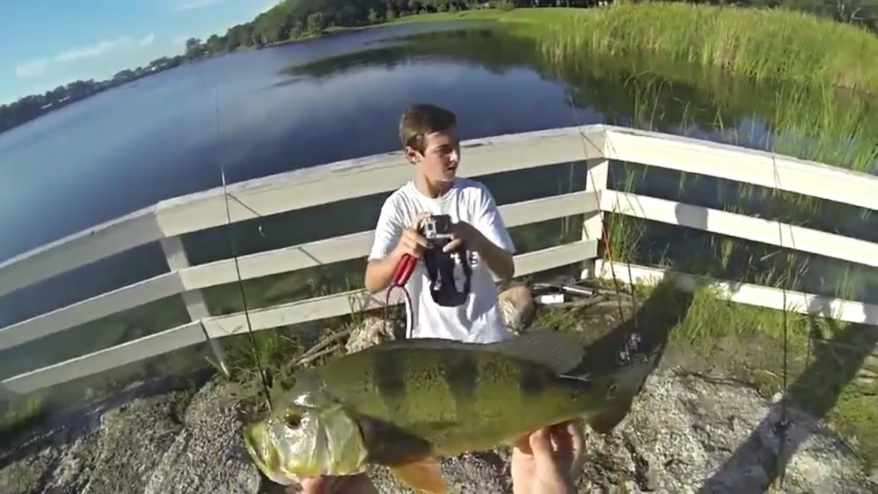 Freshwater fish of florida - Peacock Bass Freshwater Fishing In South Florida Fishing Topeekeegee Yungee Park
