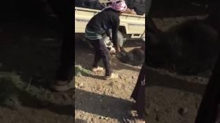 بالفيديو.. نفوق 40 رأس ماعز داخل مستودع أعلاف في مهد الذهب