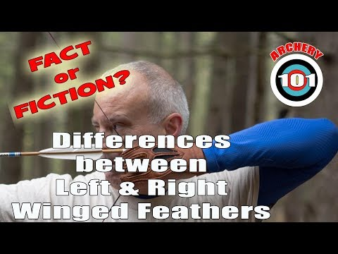 Archery 101- Left Wing Vs Right Wing Feathers