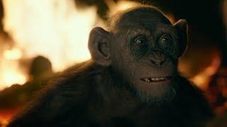 【猩球崛起:終極決戰】精彩片段搶先看 - 壞猩猩篇