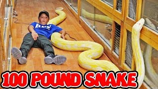 HOLDING THE WORLDS LARGEST SNAKE