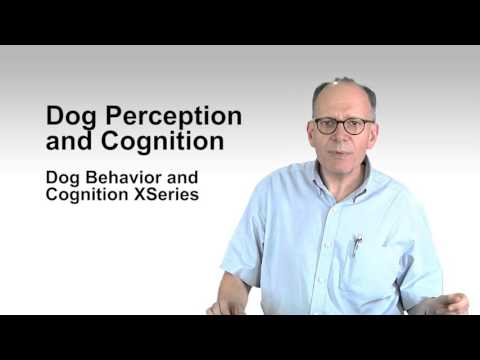 Dog Perception and Cognition   ASUx on edX   Course About Video