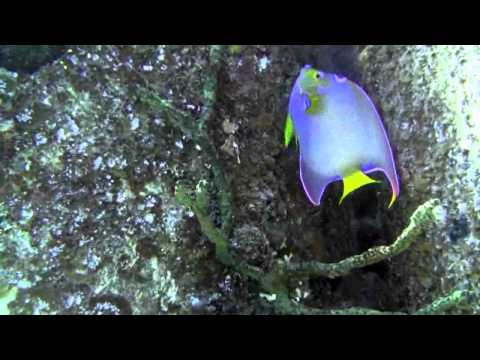 Diving Nassau Bahamas with Dr Mark 2-11-11.flv