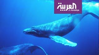 تفاعلكم | حقيقة صوت الحوت الأزرق الذي أفزع الناس!