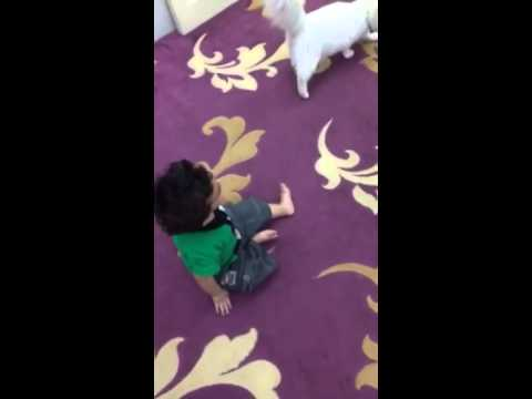 قط يفترس طفل CAT ATTACKS BABY