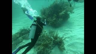 Diving Costa Maya -  Go Pro Footage