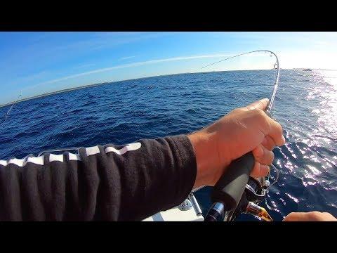 Bottom Bash   Bass Strait   PPB
