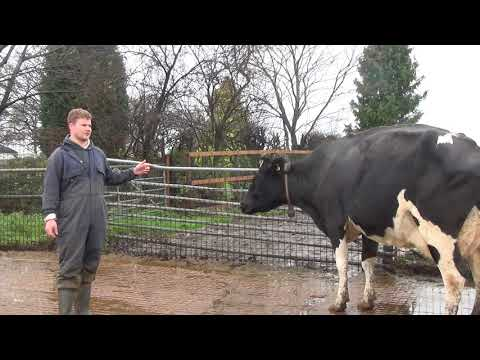 A Farmer Case Study On The Benefits Of Monitoring Dairy Cow Rumination