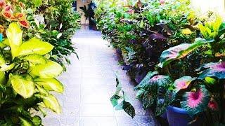 7 Dicas Essenciais Para Qualquer Planta