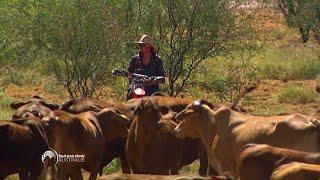 Faut pas rêver - Australie : western aux antipodes - 31/07/15