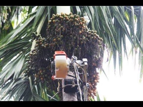 AGRIMATE Arecanut Harvester-Sprayer (Kannada)
