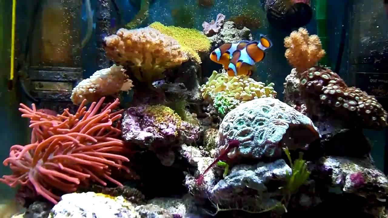 Sea nano 60 liter hd zee aquarium youtube for Decoration aquarium 60 litres