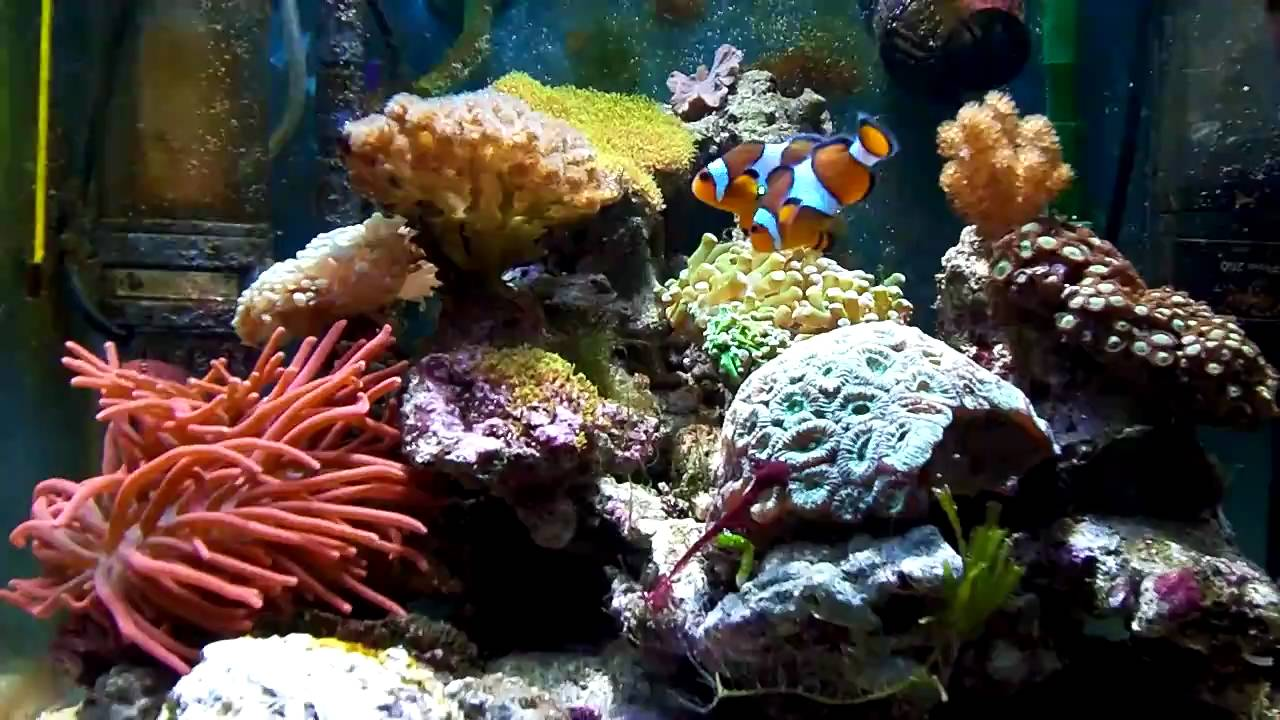 sea nano 60 liter hd zee aquarium youtube. Black Bedroom Furniture Sets. Home Design Ideas