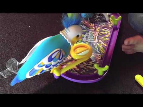 LIttle Live Pets Cleverkeet Talking Parakeet Toy