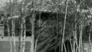 Brian Jonestown Massacre - Donovan Said