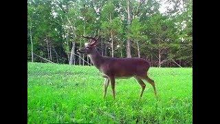 chasing-bucks-strategies-food-plots-trail-cameras-460-growingdeer-tv