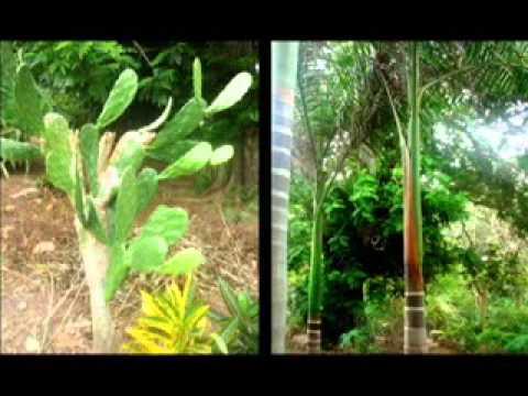 Botanic Garden  Bakau  The Gambia