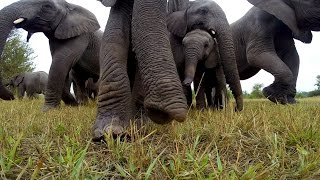 gopro get up close with wild elephants