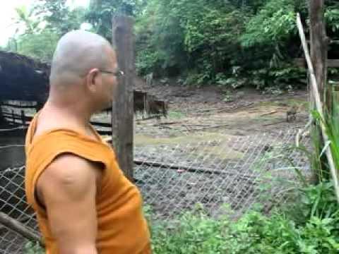 โครงการปรับปรุง โรงเลี้ยงหมูป่า
