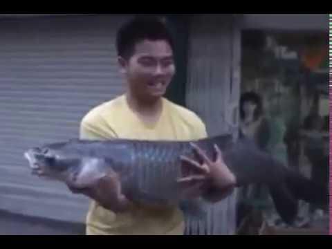 Câu cá trắm đen khủng tại Lục Ngạn  - Bắc Giang P3 - Fishing