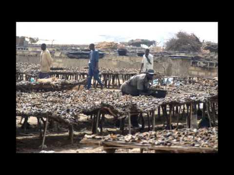 Sénégal  -  le poisson fumé de Joal Fadiouth