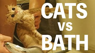 【CATS VS BATH】Kitty hating taking a shower took a bath for the first time.