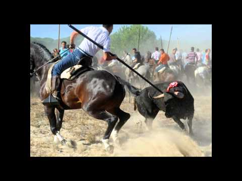 """Bulls' Fiesta"" - Spain's most known ""tradition""..."