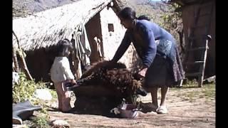 Ceremonia Pachamama Y Sacrificio De Un Carnero 1