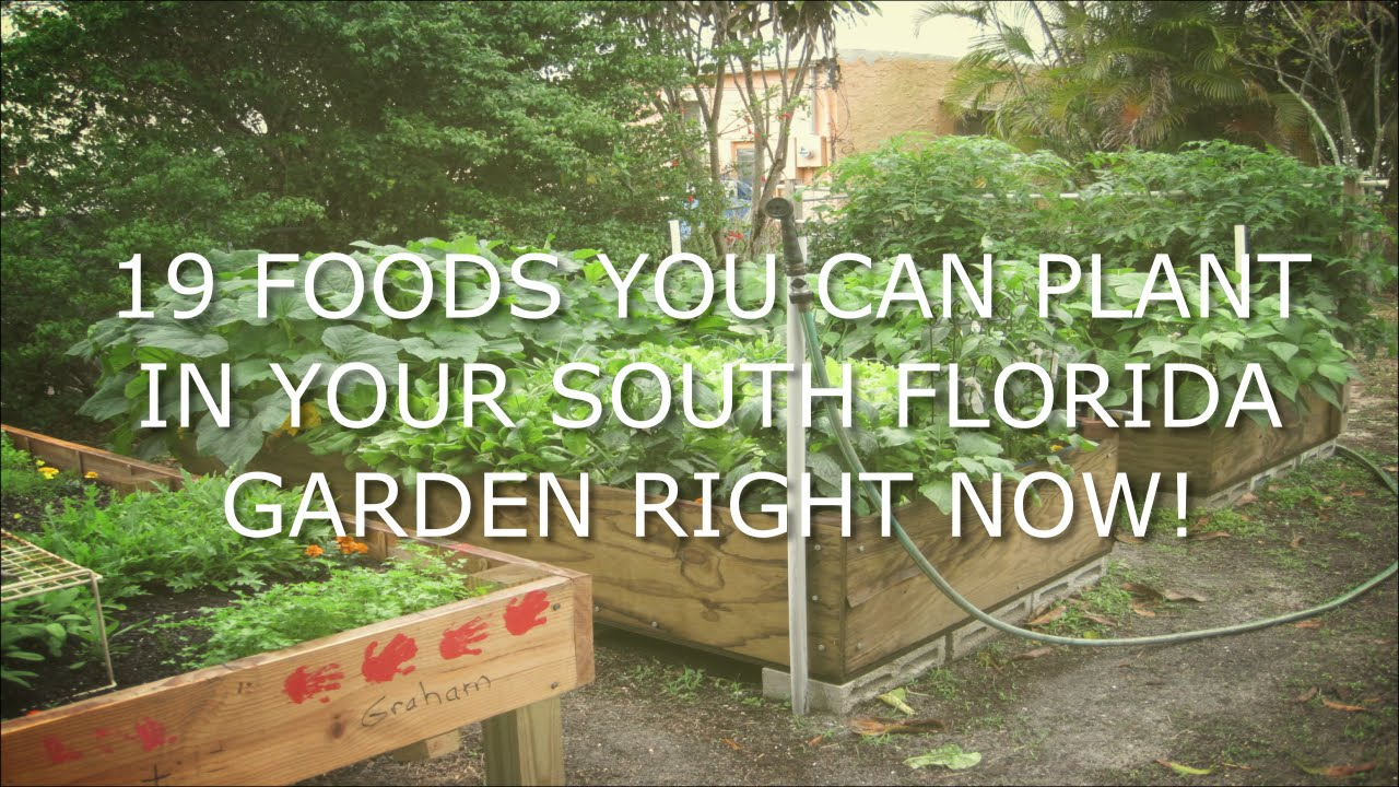 19 Vegetables You Can Plant In South Florida In Spring   YouTube