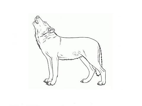 карандашом картинки детей волка для