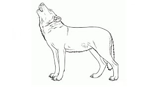 How to Draw a Wolf / Как нарисовать волка(Drawing Channel - https://www.youtube.com/channel/UCaZm6IvtL9zNeDwQi571asA/videos Канал для рисования ..., 2015-04-22T08:23:18.000Z)