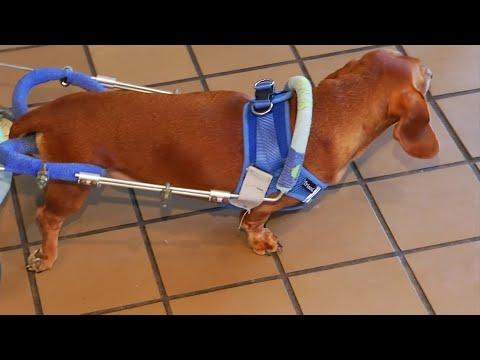 V Mornings - Valentine's Bake Sale Raises Money to Buy Paralyzed Dog Wheelchair
