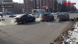 Курск. Собачьи бои посреди дороги