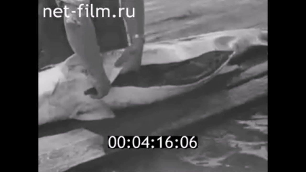 ФИЛЬМ ЧЕРНАЯ ИКРА. (1991) Об астраханских рыбацких тонях, о рейдах рыбоохраны