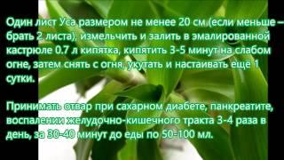 Настойка золотой ус инструкция и рецепты по применению и лечению