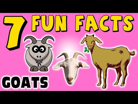 GOATS! 7 FUN FACTS ABOUT GOATS! FACTS FOR KIDS! Learning Colors! LOL! Funny! Sock Puppet!