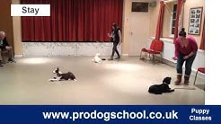 Puppy Training and Socialisation Classes - Pro Dog School - West Sussex, UK