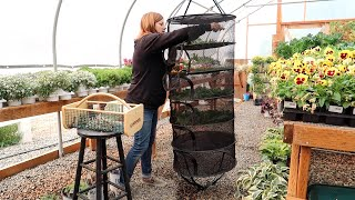 Staking Up a Large Grass & Drying Herbs!  // Garden Answer