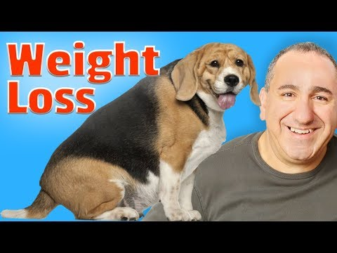 How to help my dog lose weight fast