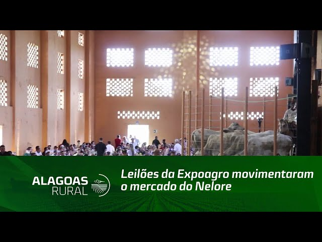 Leilões da Expoagro movimentaram o mercado do Nelore