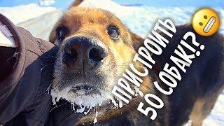 Беда... Заболела бабушка с 50 собаками. Собака на костылях.