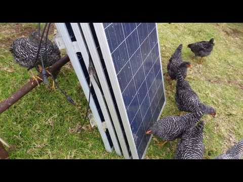 Neighbor Buying solar panels 1 dead chicken and missed up neck just another day