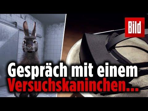 VR-Experiment: Nach diesem Video isst Du kein Fleisch mehr 🐰😢