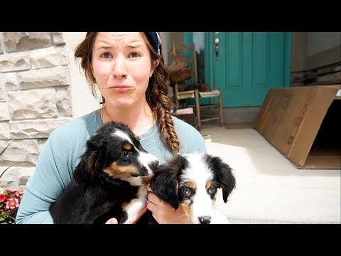 HUSBAND SURPRISES WIFE WITH NEW PUPPY! 🐶 **Pick ONE**