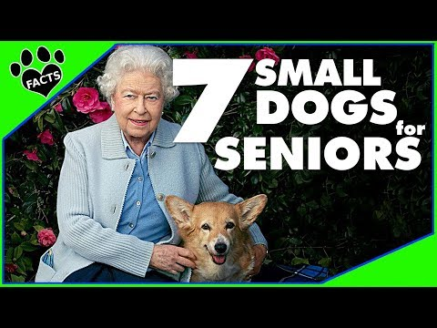 7 Best Small Dog Breeds for Seniors