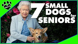 Small Dog Breeds for Seniors